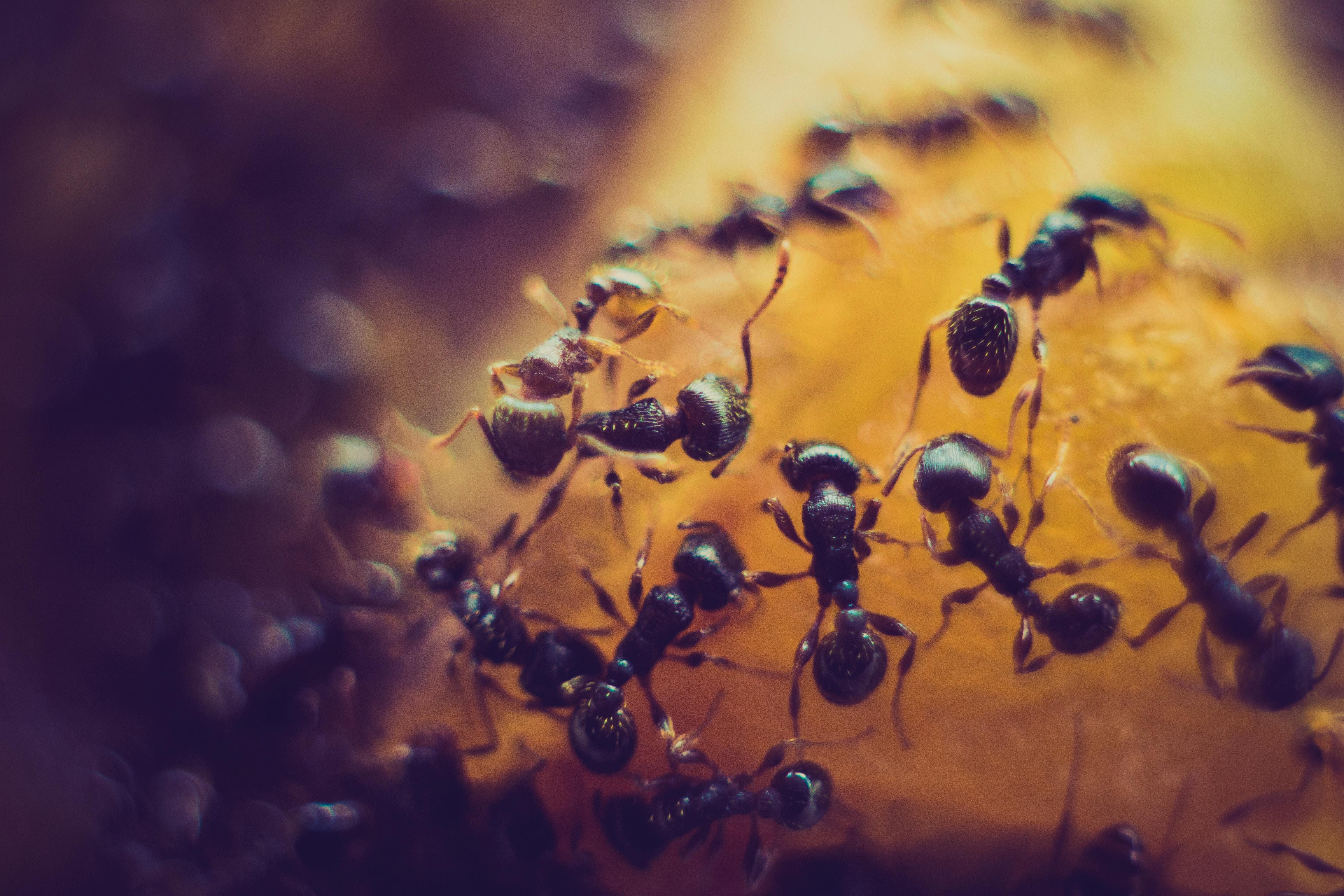 Hormigas Pruners Control De Plagas